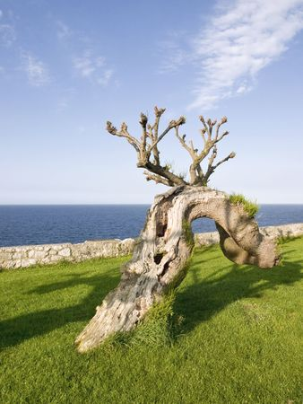 peculiar: Peculiar tree in the maritime walk