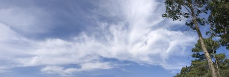 trees and sky of summer (panoramic) Stock Photo - 6681822