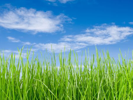 Grass tall and blue sky