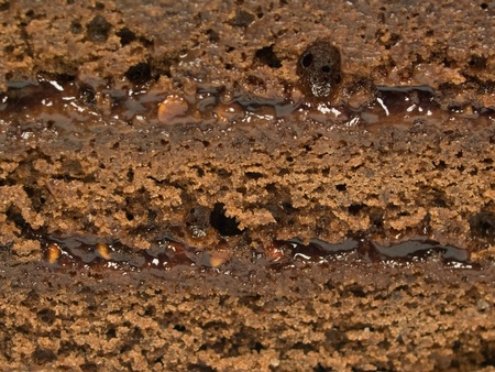 Chocolate cake with layers close-up Stock Photo