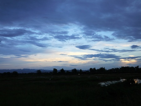 Sunset in the rice field in Chiangmai Thailand photo