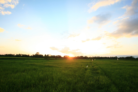 A peaceful rice field on sunrise sky background Stock Photo