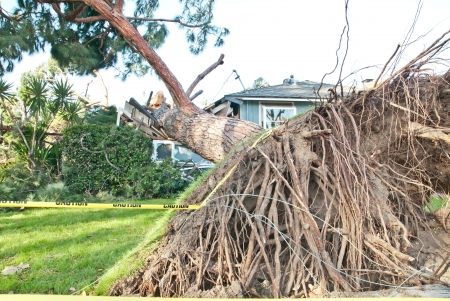 Tree crashes into home and exposes roots photo