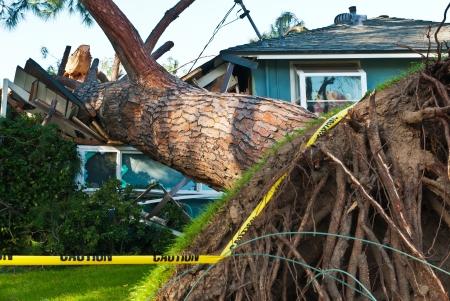 古い大きな木が嵐のための家にクラッシュします。