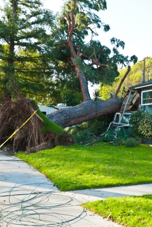 damaged roof: Old huge tree crashes into home due to storm