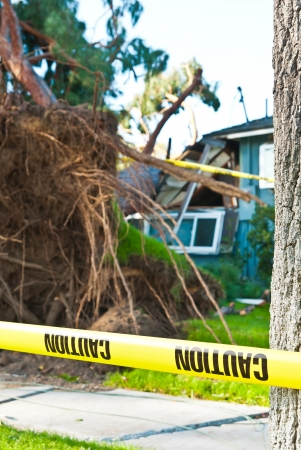 damaged roof: Old huge tree crashes into home due to storm  I hope they have good home insurance