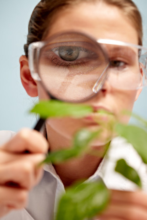 botanist: Young botanist examining plant with magnifying glass Stock Photo
