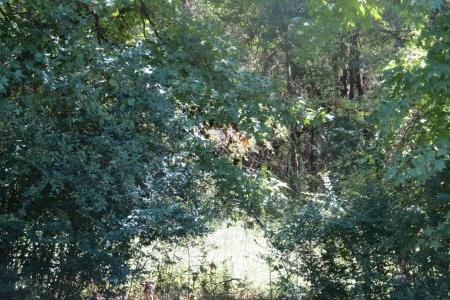woodland Glade Stock Photo