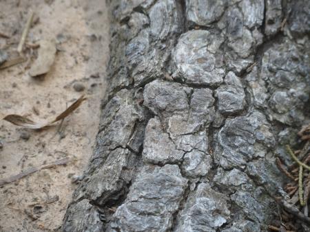 Root Bark