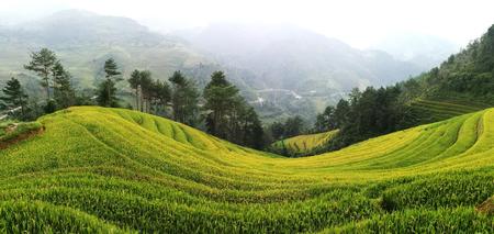 Rice fields on terraced of Mu Cang Chai, YenBai, Vietnam. Rice fields prepare the harvest at Northwest of Vietnam Stock Photo