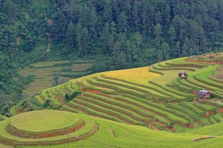 yuan yang: Beautiful landscape of terraced rice field in Mu Cang Chai, Vietnam