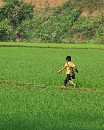 niños pobres: Son La, Vietnam - ABR 10, 2014: los niños pobres vietnamitas no identificados que se ejecutan a través de un campo de arroz verde en el camino a su escuela. niños de la escuela y las niñas aquí tienen que ir a la escuela en los pies. Editorial