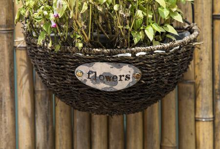 Spring flower on vintage flower pot under the sunlight Stock Photo