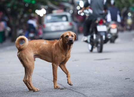 crowded street: Lost dog standing on a crowded street
