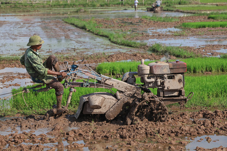 cultivating: HANOI, VIETNAM - JUL 13, 2014: Unidentified Vietnamese farmer handling a tractor in the paddy field in a rural area of Hanoi at the beginning of a new season.