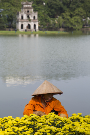 Hanoi, Vietnam - Aug 27, 2016: Asian gardener taking care of an yellow botany garden on the bank of Hoan Kiem (Sword) lake and Turtle Tower on a small island behind. Editorial