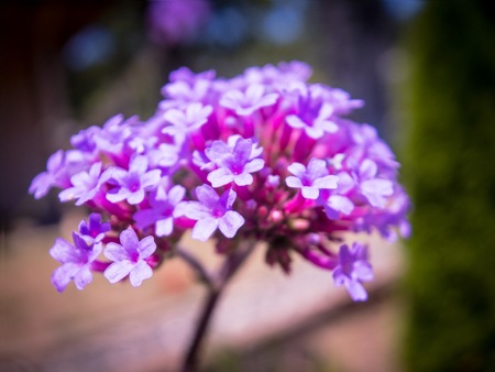 Macro shot of purple flowers on a sunny summer day