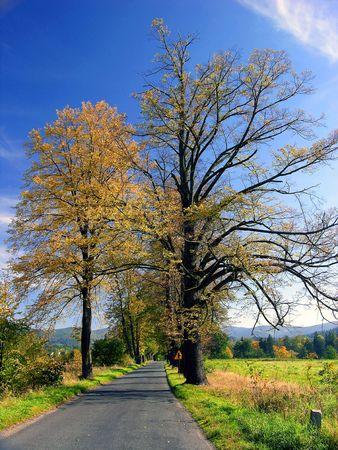 way among autumn tree on blue sky Stock Photo