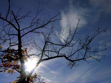autumn top tree & sun & blue sky Stock Photo