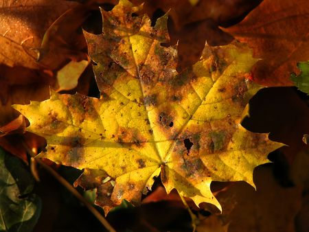 fall yellow autumn leaves