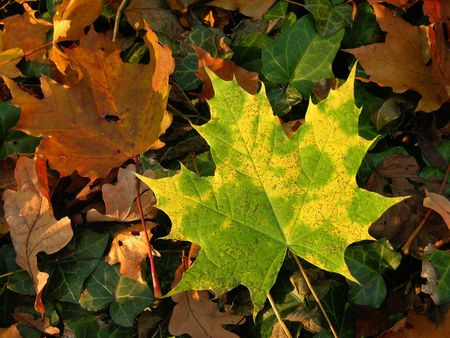 fall green and yellow autumn leaves Stock Photo