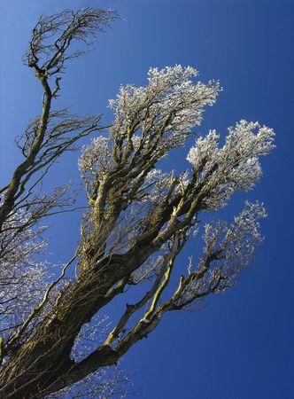 winter tree on blue sky Stock Photo