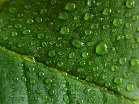 Water droplets on green leaf,  fresh photo