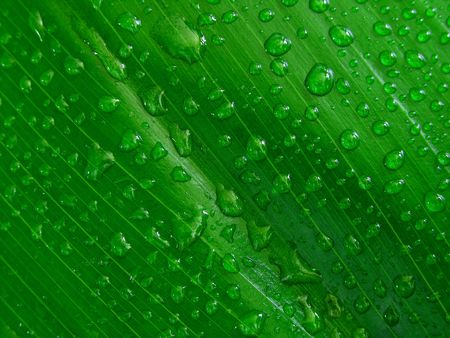 Water droplets on green leaf,  fresh Stock Photo - 373020