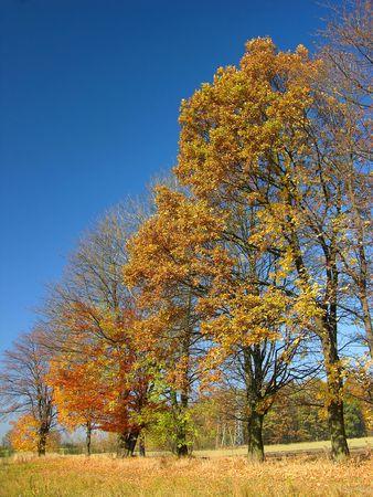 autumn Landscape, colourful trees Stock Photo - 373019