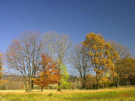 autumn Landscape, colourful trees Stock Photo - 373015