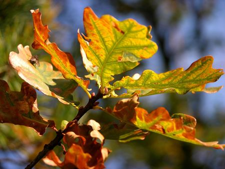 colourful autumn leaves on branch