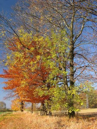 autumn trees Landscape, colourful Stock Photo - 382772