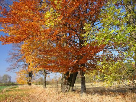 autumn Landscape, colourful trees