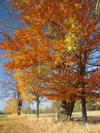 autumn Landscape, colourful trees Stock Photo - 382774