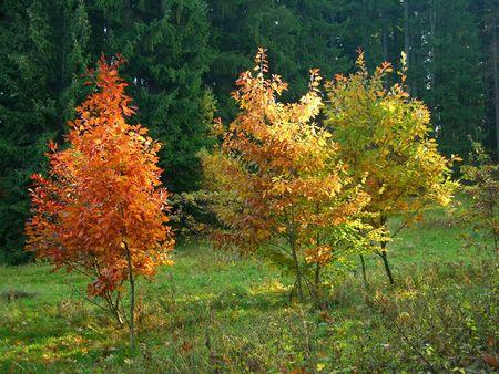 autumn colourful three trees Stock Photo