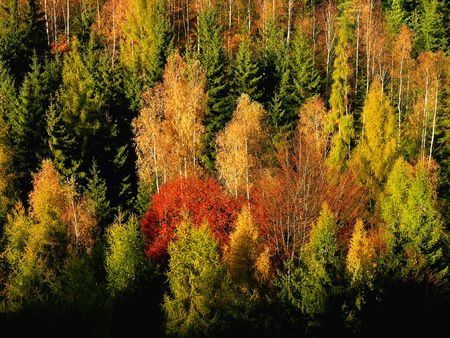 autumn forest, Landscape, colourful trees Stock Photo