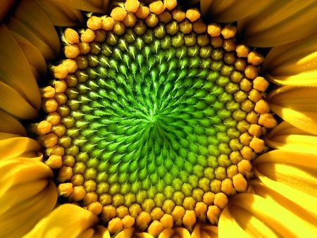 One Sunflower green and yellow