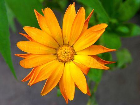 center yellow orange flowers, green background
