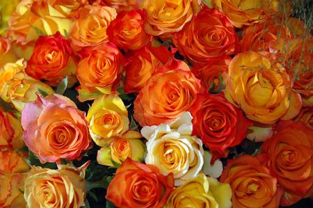 Bouquet orange nad red Rose Stock Photo