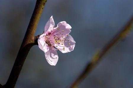 spring, blossom on blue sky background