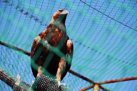 captivity: eagle in a cage