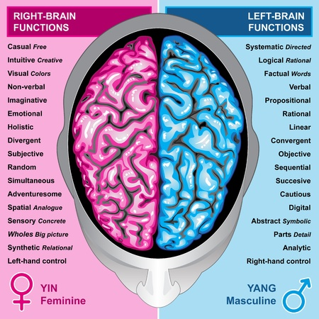 nervous: Human brain left and right functions