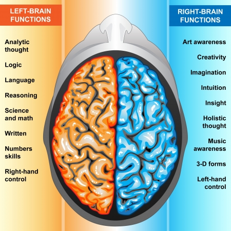 Human brain left and right functions photo