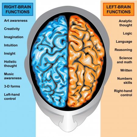 Funciones del cerebro humano izquierdo y derecho