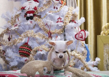 A dog of the Chihuahua breed sits on a plaid with New Years pictures against the backdrop of a Christmas tree and looks down at the fallen deer horns. The tree is decorated with garlands and decorations.
