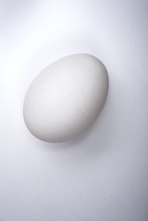 One white chicken egg lies on a white sheet of paper background.