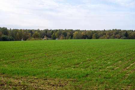 A large field with green grass and a growing forest behind the field on the edge. Blue sunny sky with clouds.