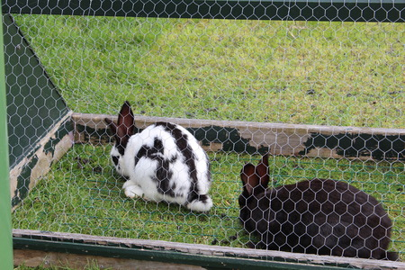 rabbit cage: rabbits in cage