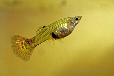 aquarium hobby: fish