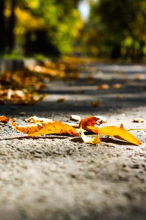 individualist: leaf Stock Photo